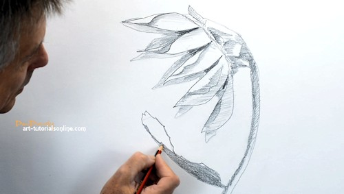 draw a sunflower from the side