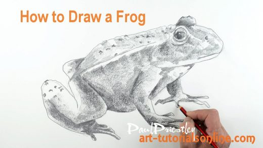 how to draw frog legs